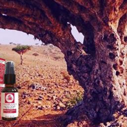 OZNaturals serum Dragon Blood